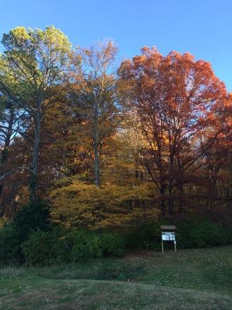 Oak Park Trails